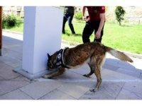 Uşak'ta narkotik detektör köpekler uyuşturucuya göz açtırmıyor