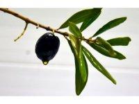 Zeytinyağı ithalatı hakkında açıklama