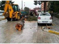 Denizli'de fırtına çam ağacını yıktı