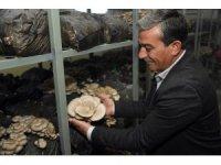Mersin'de mantar hasadı yüz güldürüyor