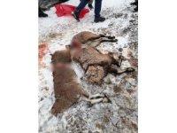 Koruma altındaki keçileri vurdular, suçüstü yakalandılar