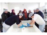 Hibe desteği alan süt ürünleri tesislerinde inceleme