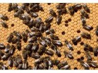 ABD'de yarım milyon arının ölümüne yol açan çocuklara gözaltı