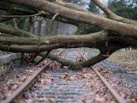 Almanya'da fırtına: 8 kişi hayatını kaybetti
