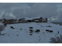 Kış şartlarında zorlu hayvan bakımı
