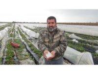 Mersin'de dolu, sera ve bahçelere zarar verdi