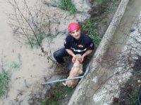 Dereye düşen köpeği itfaiye ekipleri kurtardı
