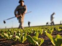 Organik gıda ihracatı yüzde 17 arttı