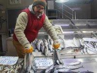 Sinop'ta balıkçılara palamut sürprizi