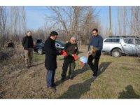 Orman Baykuşu doğaya salındı