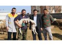 Damızlık Koyun Keçi Yetiştiricileri Birliğinden yerli hayvanlara destek talebi