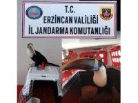 Erzincan da 25 bin TL değerinde Tukan cinsi kuş ele geçirildi