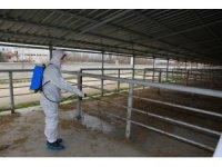 Şap hastalığı nedeniyle hayvan pazarları kapatıldı