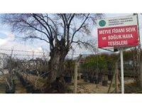 Ödemiş'ten Türki Cumhuriyetlere 1 milyon meyve fidanı