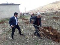 Doğanşehir'de yılın ilk cevizleri toprakla buluştu