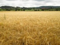 Genç çiftçilere 931 milyon lira destek