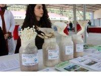 Türk Mantar Yetiştiriciliğine standardizasyon getiriliyor