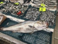 20 kiloluk kötek balığı yıllar sonra Akçakoca tezgahlarını süsledi