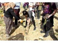 Beyaz Kule Okulları 'Dünya Ellerimde' projesi kapsamında fidan dikti