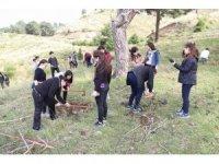 Burhaniye'ye 150 fıstık çamı