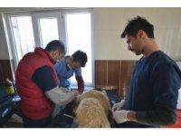 Köpekten 2 kilo 200 gram tümör çıktı