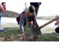 Hizan'da ağaçlandırma çalışması