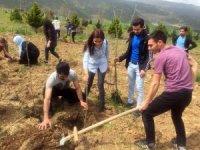 Üniversite öğrencileri Nevruz'u ağaç dikerek, kutladı