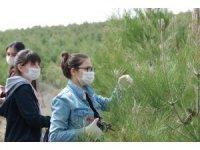 GKV'liler ormanları temizledi