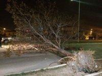Erzincan'da fırtına ağaçları yerinden söktü