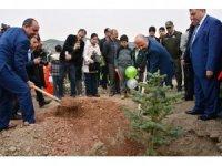 """Bölge Müdürü Nane: """"Amasya'da son 15 yılda 31,8 milyon fidan dikildi"""""""