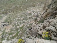 Kayalıklarda mahsur kalan keçiler kurtarıldı