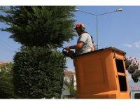 Bolu'da, bir yılda 9 bin 600 ağaç dikildi