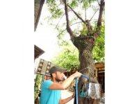 Ağaç gövdesinde sarmaşık gül yetiştirdi