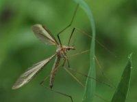 Kocaeli'de korkutan sinek zararsız çıktı
