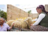 Sarıgöl'de iki genç çiftçi küçükbaş hayvanlarına kavuştu
