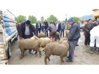 Devrek'te çiftçilere küçükbaş hayvan dağıtımı yapıldı
