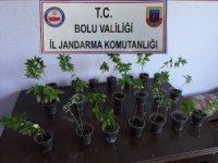 Bolu'da hint keneviri ve sahte içki operasyonu