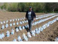 Zirai dona karşı 3 bin pet şişeyle sera kurdu