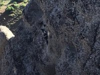 Kayalıklarda kalan keçileri itfaiye ekibi  kurtardı