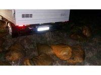 Muradiye'de 4 ton kaçak balık ele geçirildi
