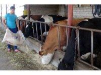 Bir ayda üç kez artan yem fiyatları hayvancıları kesime mecbur bıraktı