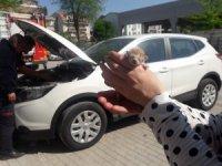 Aracının motoruna sıkışan yavru kediyi sahiplendi