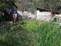 Tarihi Kavaklı köyünde bir koca çınar