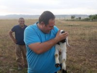 Nusaybin'de kuyuya düşen kuzuyu itfaiye kurtardı