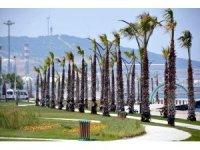 Aliağa sahilindeki palmiye ve yeşil örgü tamamlandı