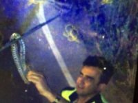TIR'ın sileceğine dolanan yılanı polis eliyle aldı