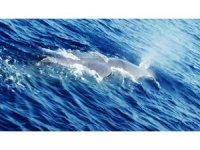 Fethiye'de balina görüldü