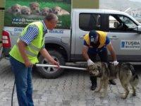Tuşba'da sokak hayvanları için çalışma