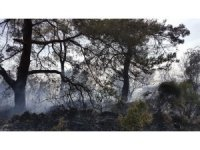 Antalya orman yangını seralara sıçramadan söndürüldü