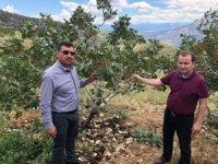Mut'ta dolu yağışı 15 bin dekar alanda ürünlere zarar verdi